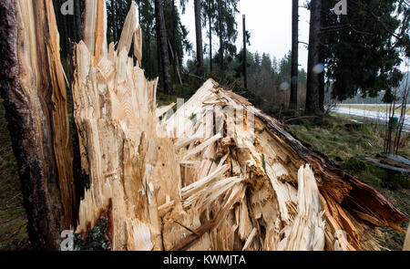 Breitnau, Germany. 4th Jan, 2018. Toppled trees cover the ground of a forest along route B31 in the Black Forest - Stock Photo
