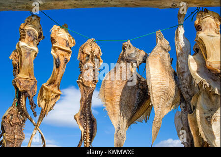Close-up of unidentified fish species hanging on a wooden rack to dry in the air, Iceland - Stock Photo