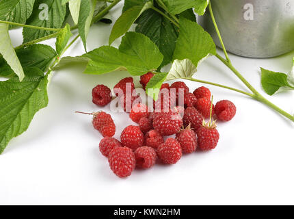 Red raspberries with tin bucket and leaves on white - Stock Photo