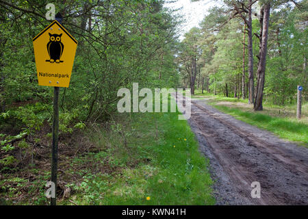 Forest trail at 'Darsser Wald', Prerow, Fishland, Mecklenburg-Western Pomerania, Baltic sea, Germany, Europe - Stock Photo