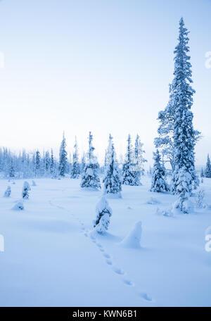 Animal track in the deep snow. Winter in Scandinavian wilderness. - Stock Photo