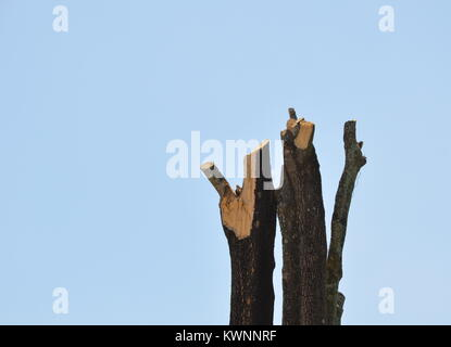 stump of big tree on sky background - Stock Photo