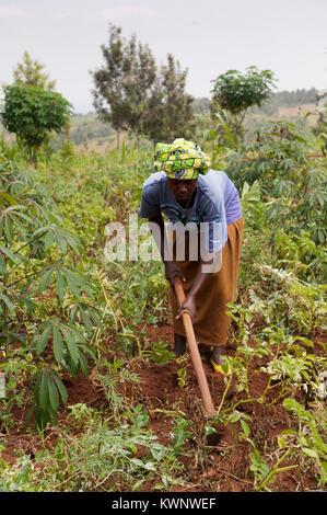 Farmer hoeing potato field in rural Rwanda - Stock Photo