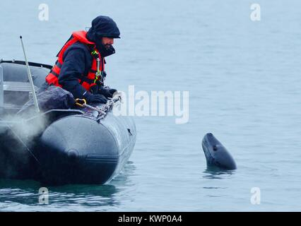 seals in antartica - Stock Photo