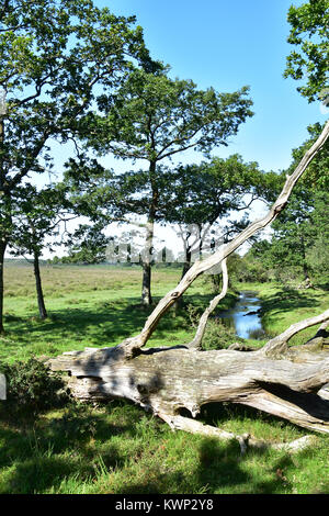 Stream on the edge of heath-land and forest in the New Forest National Park, Hampshire, England. - Stock Photo