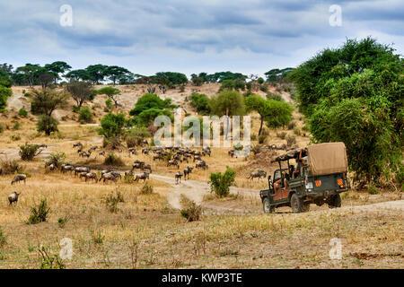 Blue wildebeest and safari car in valley of  Tarangire National Park, Tanzania, Africa - Stock Photo