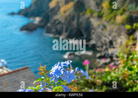 A soft focus view from the hills above Vernazza, Cinque Terre Italy, showing the bay and rocky coastline with flowers - Stock Photo
