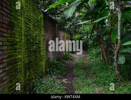 An ancient brick house at green forest in Java Islands, Indonesia. - Stock Photo