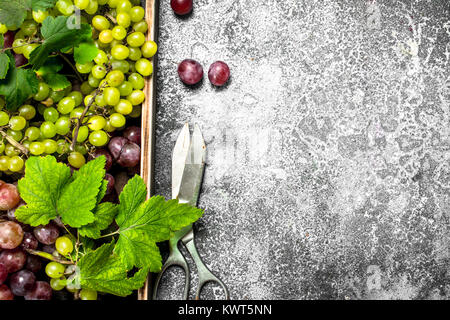 Fresh grapes with leaves on a wooden tray. On a rustic background. - Stock Photo