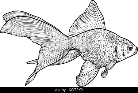 Goldfish illustration, drawing, engraving, ink, line art, vector - Stock Photo
