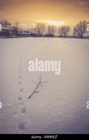 Cat footprints on thin snow covering a frozen pond - Stock Photo