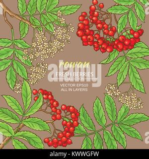 rowan branches vector frame on color background - Stock Photo