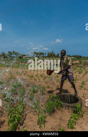 Irrigating fields  the old way, pulling up water from the well, watering the nearby fields by buckets full of water, - Stock Photo