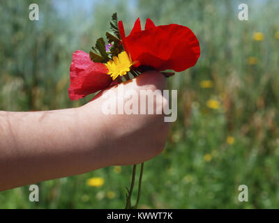 Child hand holding a beautiful bouquet of poppies and other wildflowers during spring - Stock Photo
