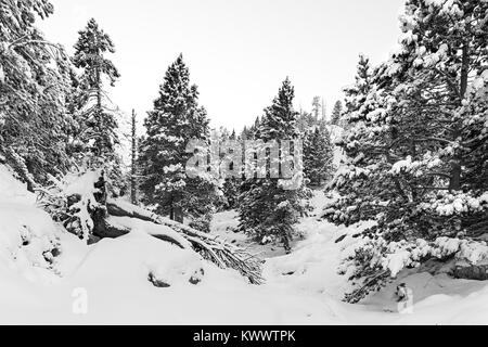 Snowy forest in pyrenees - Stock Photo