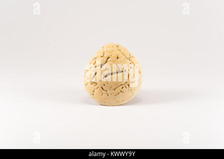 Seashell (white background) - Stock Photo