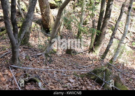 Kuroi Jukai, the Black Sea of Trees, is known as the Suicide Forest. Nooses and personal items can be found among - Stock Photo