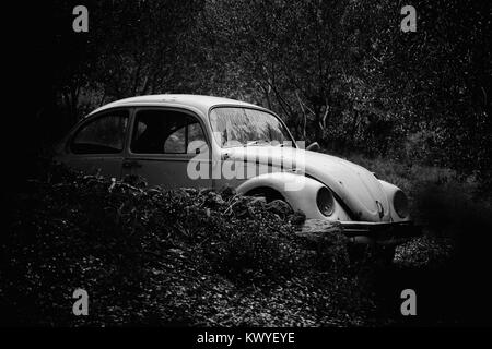 Wreck of an old and rusty car in the bushes and among the trees, a black and white image - Stock Photo