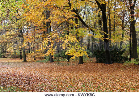 November nature at Berlin, Germany - Stock Photo