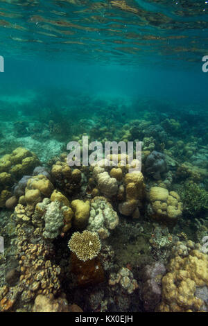 Coral reef in Palawan, Philippines - Stock Photo