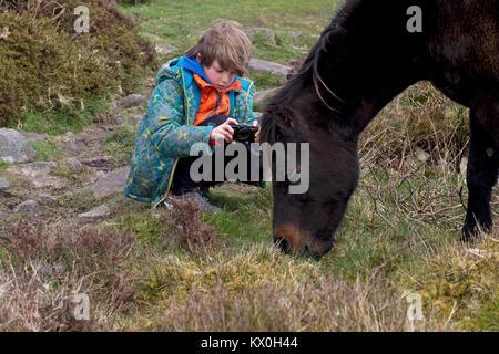 Dartmoor Pony (Equus ferus caballus) - Stock Photo