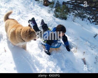 Boy and his dog sledding in the snow - Stock Photo
