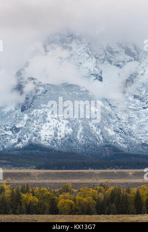 An early winter storm revealing fresh snow on the Teton Mountains above autumn cottonwood trees. Grand Teton National - Stock Photo