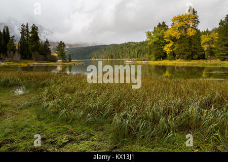 A small section of wetlands lining the shore of Phelps Lake below autumn cottonwood trees and an early winter storm. - Stock Photo