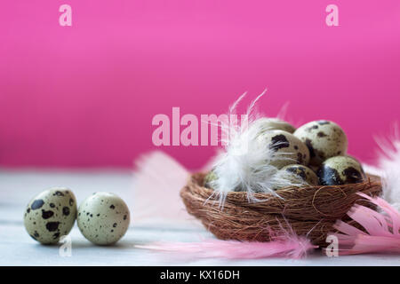 Quail eggs in nest with colorful feathers, on white wooden table against pink wall - Stock Photo