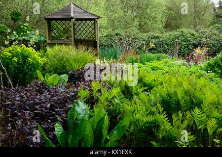 onoclea sensibilis,sensitive fern,Lysichiton americanus,skunk cabbage,damp,boggy,moist,garden,pagoda,leaves,foliage,RM floral