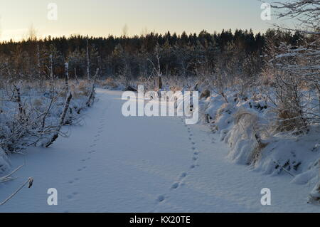 Snow ice of the winter frozen forest river at dawn in animal tracks - Stock Photo