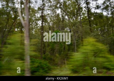 Trees moving due to camera induced blur, Queensland, Australia - Stock Photo