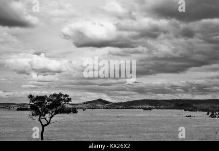 Dramatic black and white images of Australia, december, Queensland, Australia - Stock Photo