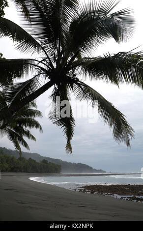 Hiker on beach Corcovado national Park Costa Rica Osa Peninsula - Stock Photo
