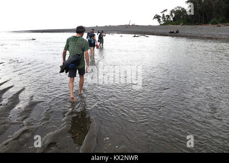 Hiker crossing river Osa Peninsula Costa Rica beach primary rain forest. Tropical Jungle tree - Stock Photo