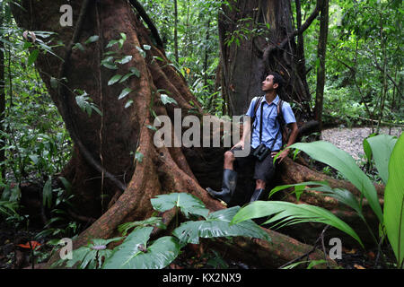 Hiker on trail Osa Peninsula Costa Rica mahogany tree in primary rain forest. Tropical Jungle tree - Stock Photo