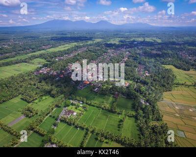 Rice field in Penebel area, Tabanan - Bali. - Stock Photo