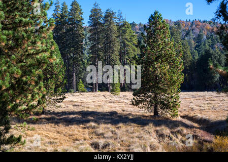 Nature landscape photographed on an Autumn morning. Palomar Mountain State Park, San Diego, California. - Stock Photo