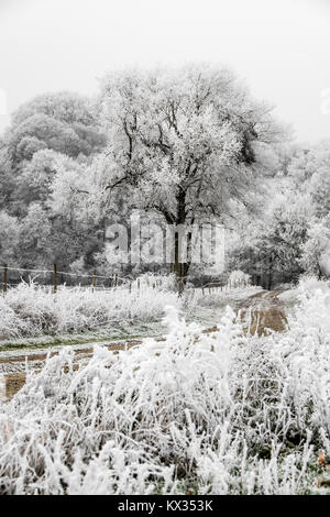 Frozen landscape. A dirt road sinks into the forest. On this cold winter morning, the bushes, the trees and the - Stock Photo