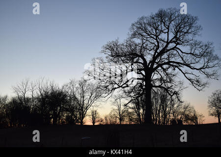 A tree silhouetted against the evening sky, a beautiful winter scene - Stock Photo