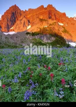 Wildflower Meadow and Three Fingered Jack Outside Sisters Oregon - Stock Photo
