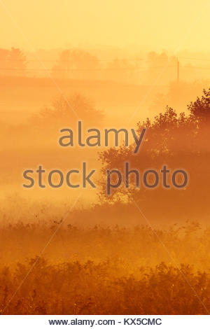 Radiation fog and misty trees in early morning in Whitby Ontario Canada - Stock Photo