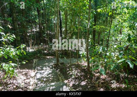 hiking path, National park Manuel Antonio, Costa Rica - Stock Photo