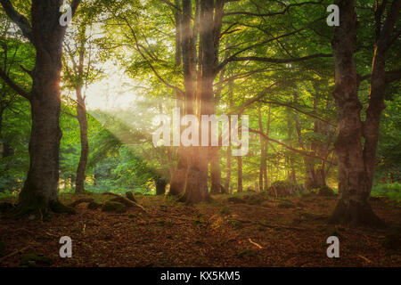 Sun rays throught a green forest in Entzia, Alava - Stock Photo