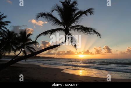 Sunset, paradise beach and palm trees, Martinique island. - Stock Photo
