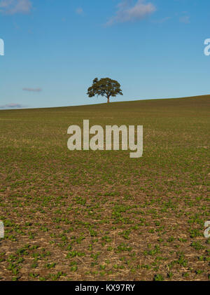 An isolated tree sitting on random rural farm land field in the northern regional area of South Australia. - Stock Photo