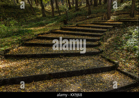 Old stairs in city park covered with yellow leaves - Stock Photo
