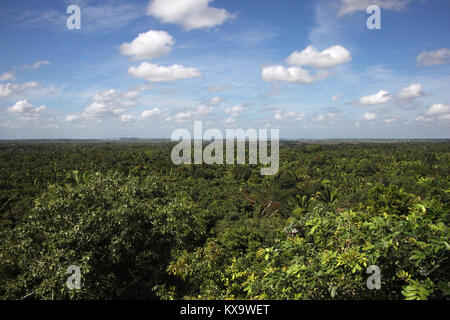 Beautiful countryside of Belize looking across the jungle to the horizon under a blight blue sky, Central America. - Stock Photo