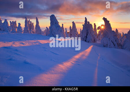Sunrise on the Brocken,winter,sun shines through deep snowy spruce trees,National Park Harz,Saxony-Anhalt,Germany - Stock Photo