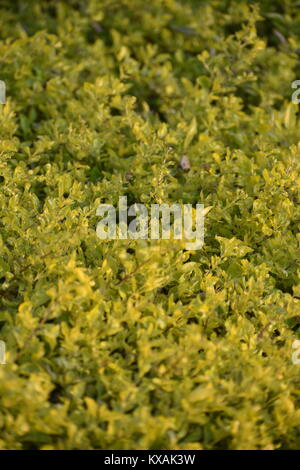 beauty of natural leaves - Stock Photo